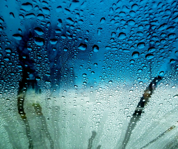 Windshield_038